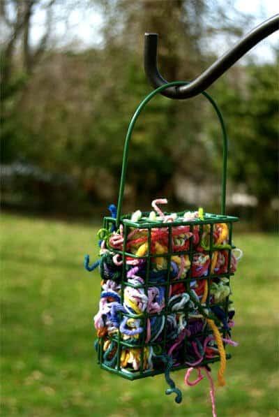 Caring for backyard birds