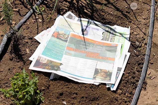 Newspaper lasagna