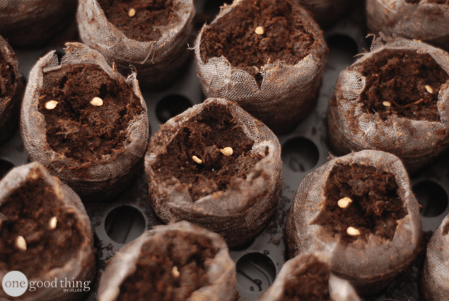 Starting Seeds Indoors - Part 1
