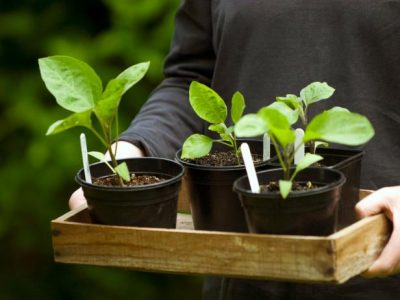 Save Money on Gardening