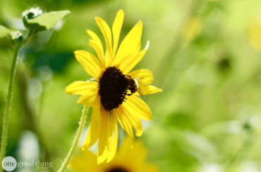 Pollinator-Friendly Garden