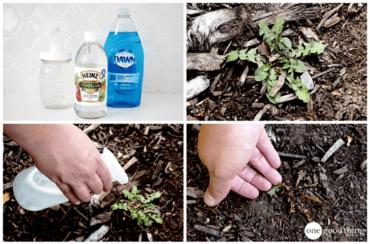 White Vinegar Weed Killing Spray