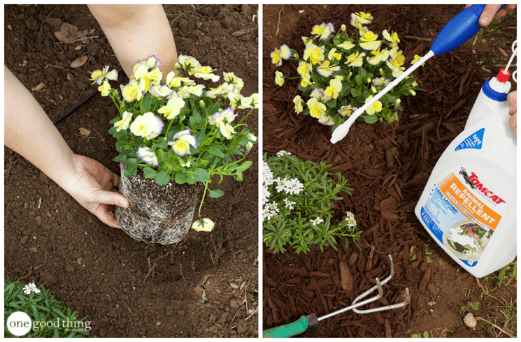 Gardening Tips That Will Save You Time And Energy