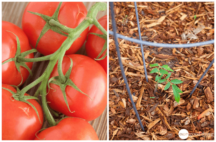 The Best Things To Grow For Your Money