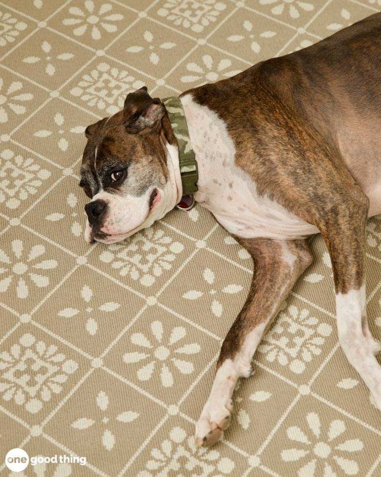 How To Induce Vomiting In Your Dog
